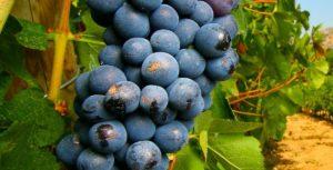 Vignes et Jardins # Tours @ Jardin de la Préfecture | Tours | Centre-Val de Loire | France