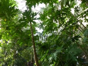 Découverte des serres # Tours @ Jardin botanique | Tours | Centre-Val de Loire | France